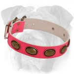 Plated Pink Leather Dog Collar for English Bulldog