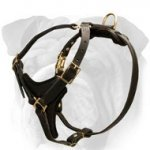 Sturdy 2 Ply Leather Harness for English Bulldog