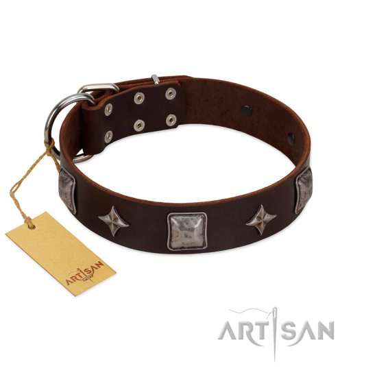 """Cold Star"" Designer FDT Artisan Brown Leather English Bulldog Collar with Silver-Like Adornments"