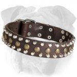 Functional Leather English Bulldog Collar with Brass Studs and Nickel Pyramids