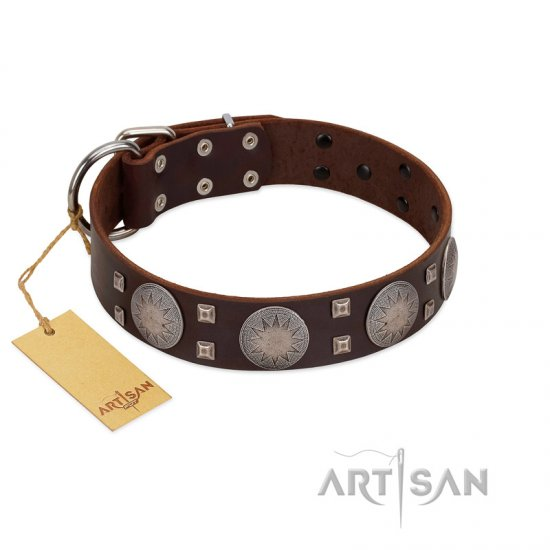 """Sun in Barchans"" Modern FDT Artisan Brown Leather English Bulldog Collar with Engraved Stars on Round Plates and Studs"
