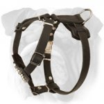 Padded Leather English Bulldog Puppy Harness with Studs