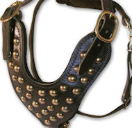 2 Ply Studded Leather Dog Harness for English Bulldog