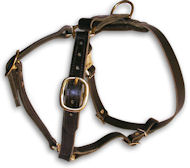 ENGLISH BULLDOG Leather Dog Harness H7 for walking and tracking