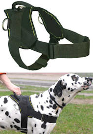 Best Dog Training Harness for ENGLISH BULLDOG