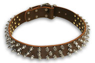 English Bulldog Spiked Brown collar 21''/21 inch dog collar