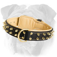 Adjustable English Bulldog Breed Spiked Leather Collar