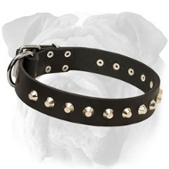 Super Strong Leather English Bulldog Collar Adorned with Nickel Pyramids