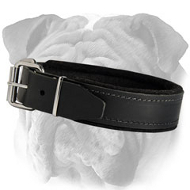 Attack/Agitation Training English Bulldog Collar with Padding