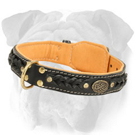 English Bulldog Padded Leather Collar with Adornment