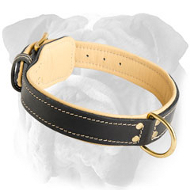 Nappa Padded leather English Bulldog Collar with Fur Protection Plate