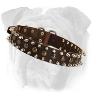 'Posh Accessory' Spiked and Studded Leather English Bulldog Collar