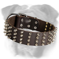 Elegant Spiked Leather English Bulldog Collar - 2 Inch Wide