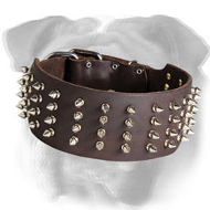 Deluxe 3 Inch Leather English Bulldog Collar with 4 Rows of Nickel Spikes