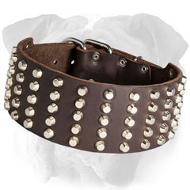 Royal Leather English Bulldog Collar Adorned with Pyramids