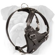 'Utmost Comfort' Leather English Bulldog Harness