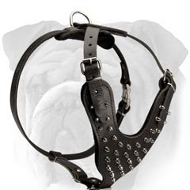 Comfortable Leather English Bulldog Harness with Nickel Plated Spikes