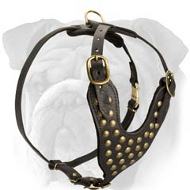 Two-Ply Latigo Dog Harness with Studs for English Bulldog