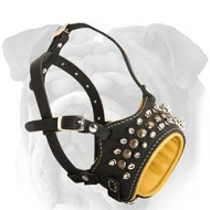 Deluxe Genuine Leather English Bulldog Muzzle with Studs and Spikes