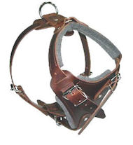 Medium dog Harness for English-Bulldog Leather Harness