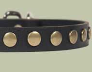 Studded Leather Puppy Collar for English Bulldog puppy