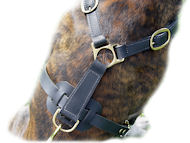 Ultimate Tracking Harness for English Bulldog