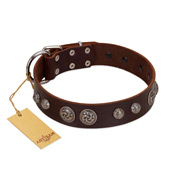 """Choco Brownie"" FDT Artisan Brown Leather English Bulldog Collar Adorned with Silver-Like Conchos"