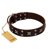 """Bigwig Woof"" FDT Artisan Brown Leather English Bulldog Collar with Chrome Plated Stars and Square Studs"