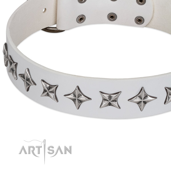 Everyday use adorned dog collar of finest quality leather