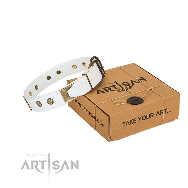 Rust-proof studs on dog collar for stylish walking