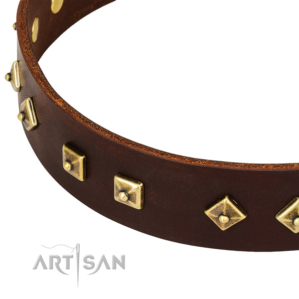 Remarkable leather collar for your impressive canine