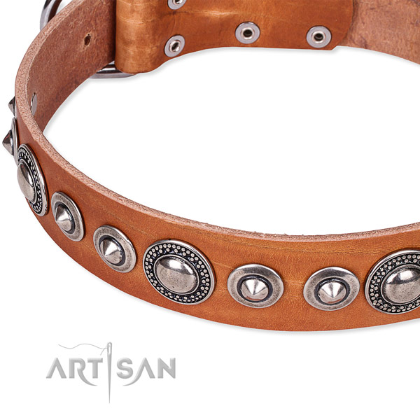 Fancy walking studded dog collar of durable full grain leather