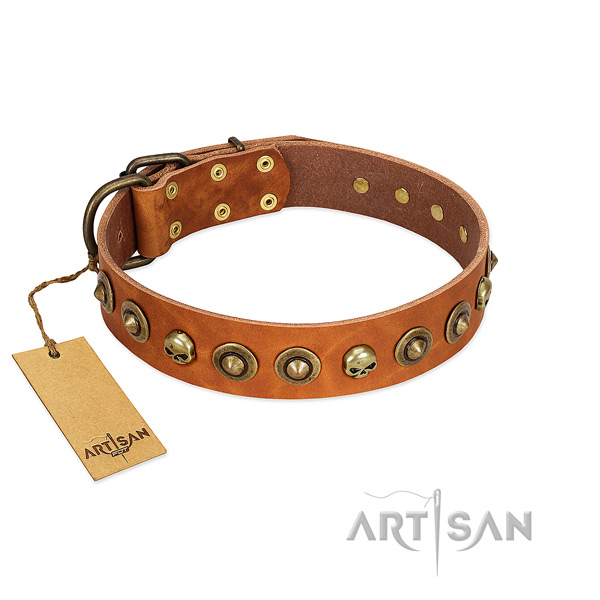 Natural leather collar with incredible studs for your pet