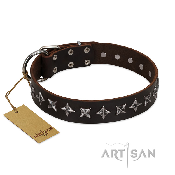 Daily walking dog collar of quality leather with embellishments