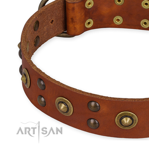 Full grain leather collar with durable fittings for your handsome dog