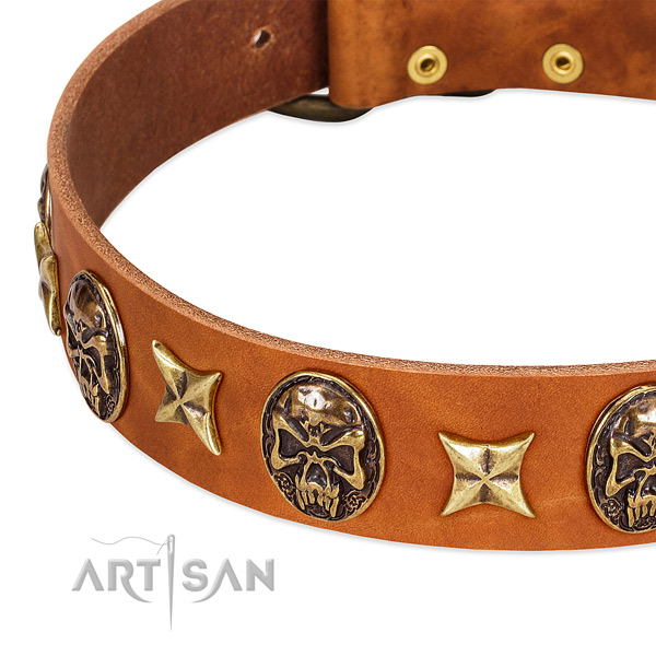 Reliable embellishments on full grain leather dog collar for your four-legged friend
