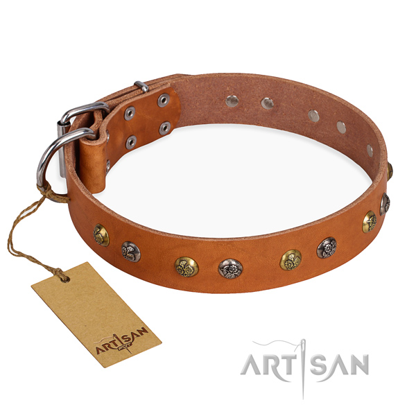 Daily use easy wearing dog collar with reliable buckle