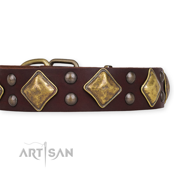 Full grain natural leather dog collar with extraordinary rust resistant adornments