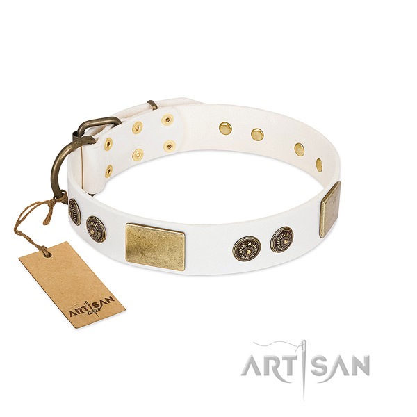 Fashionable full grain leather dog collar for everyday use