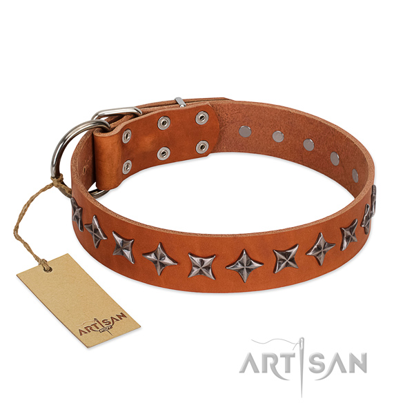 Everyday walking dog collar of top notch leather with decorations
