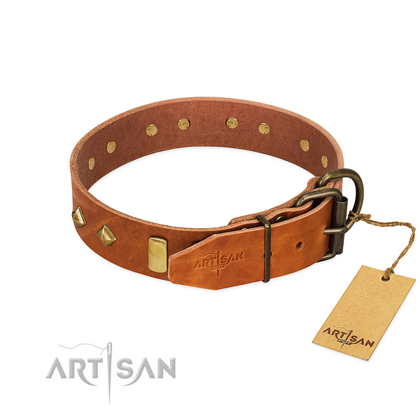 Everyday walking full grain leather dog collar with incredible embellishments