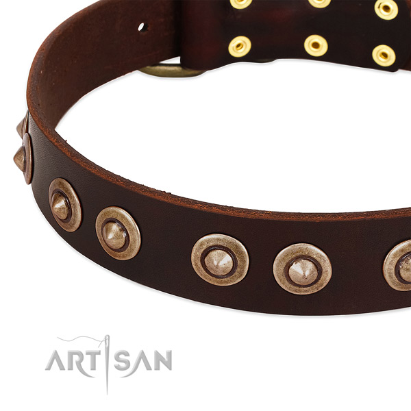 Rust-proof studs on leather dog collar for your dog