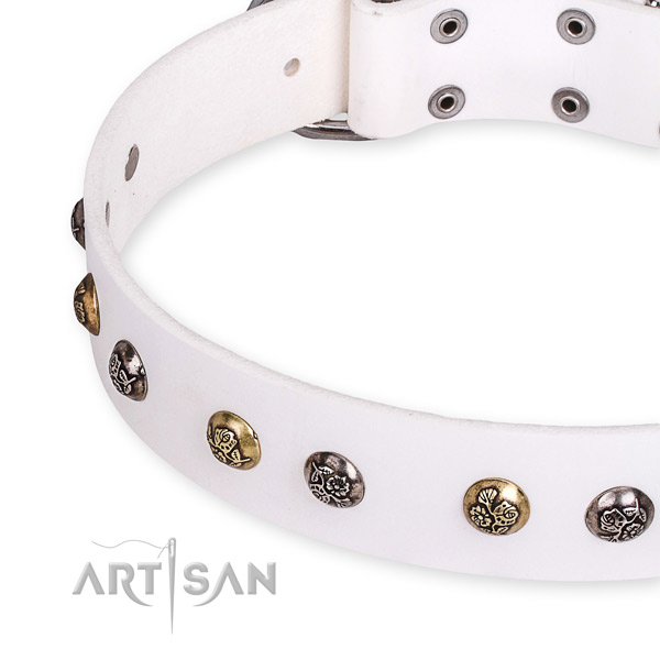 Full grain natural leather dog collar with trendy strong adornments