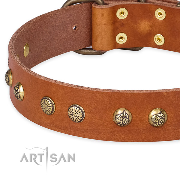 Full grain leather collar with reliable hardware for your beautiful dog