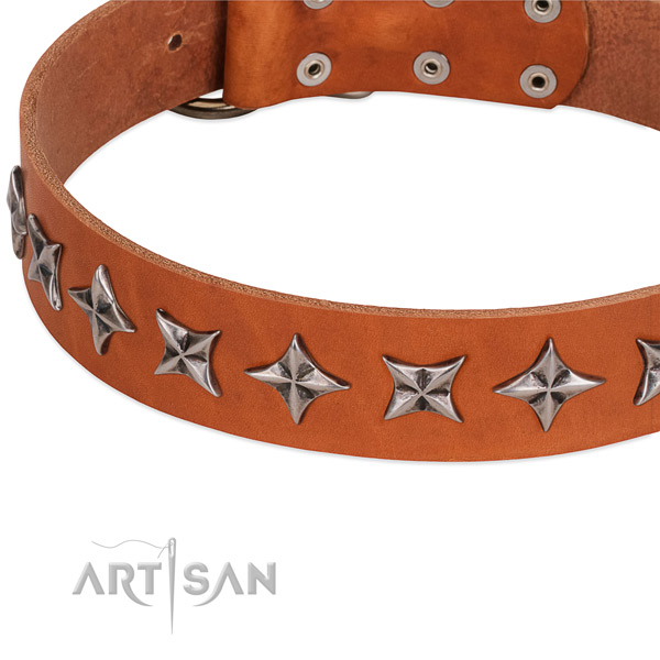 Stylish walking decorated dog collar of quality natural leather