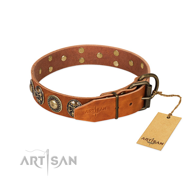 Rust-proof buckle on daily walking dog collar