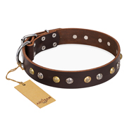 """Golden""n""Silver Luxury"" FDT Artisan Leather English Bulldog Collar with Engraved Studs"