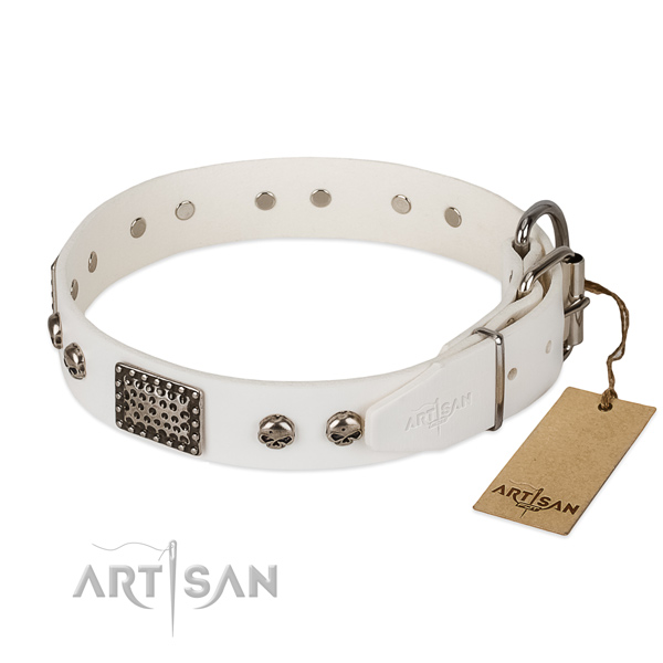 Rust resistant traditional buckle on stylish walking dog collar
