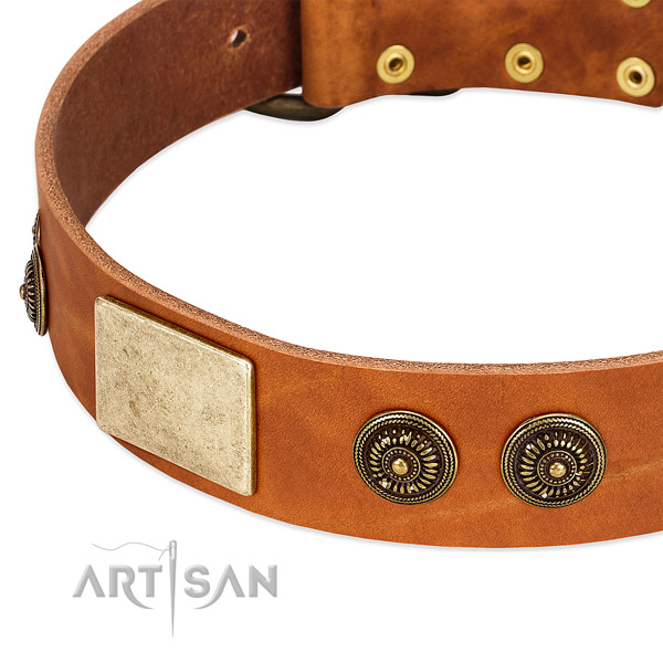 Extraordinary dog collar crafted for your handsome pet
