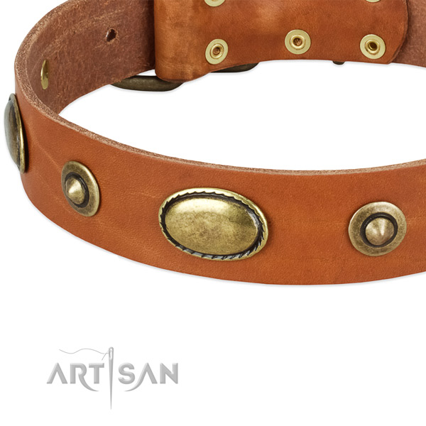 Durable adornments on full grain natural leather dog collar for your four-legged friend
